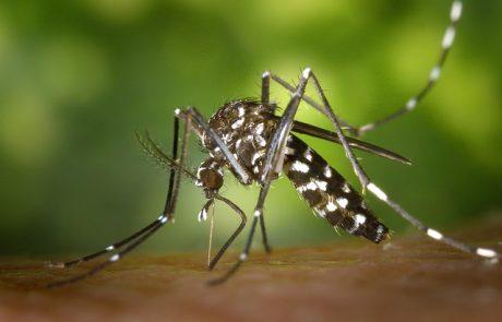 יתושים עם נגיף קדחת הנילוס המערבי התגלו בדרום הארץ